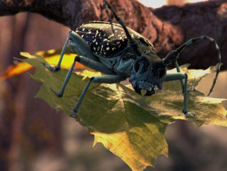Asian Longhorned Beetle Animation
