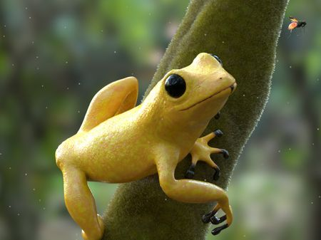 Frog Project