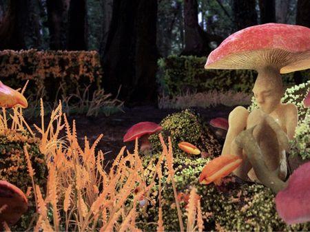 A mushroom not like the others