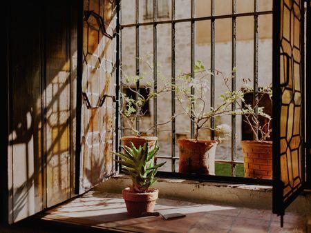 Window Ledge Garden - 'Match This' Lighting
