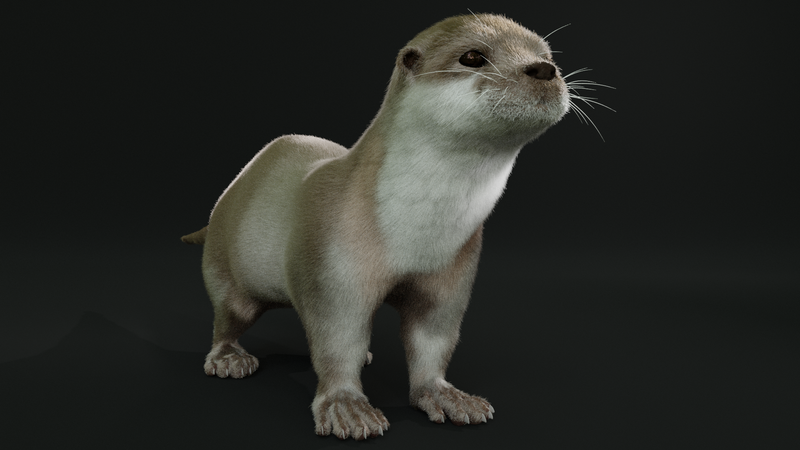 Otter character grooming