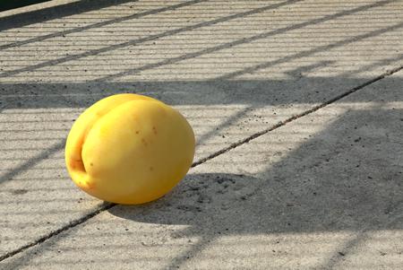 Apricot Composite