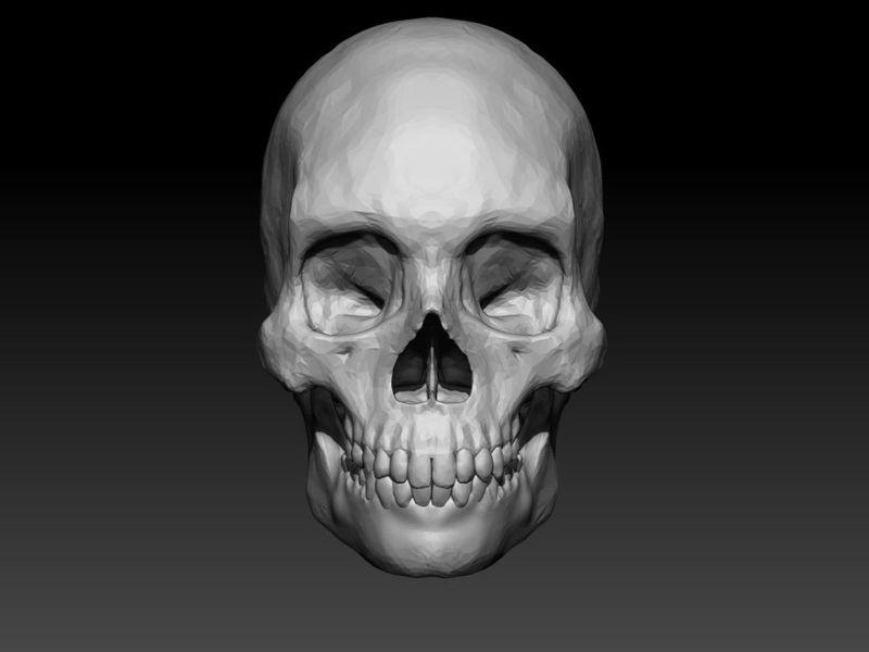 Skull on ZBrush