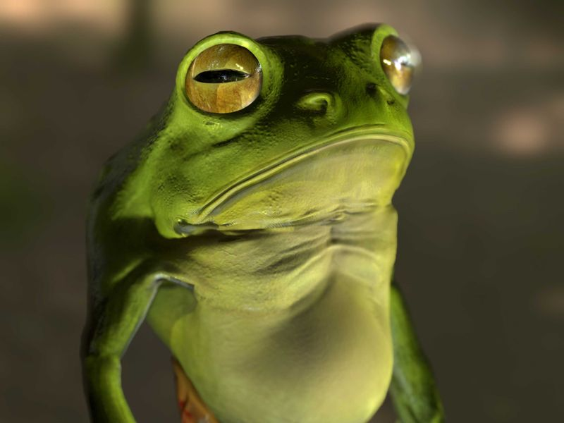 Janusz the frog