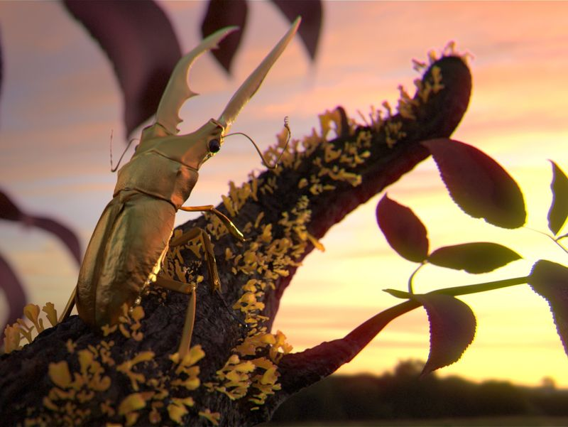 Insect - Cyclommatus metallifer