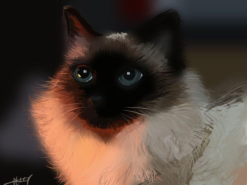 The royal cat