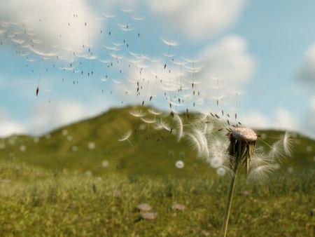 Dandelion Simulation