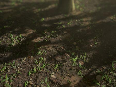 Grass Ground - PBR Material