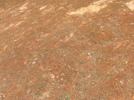 Pine Forest Ground - Photogrammetry Material