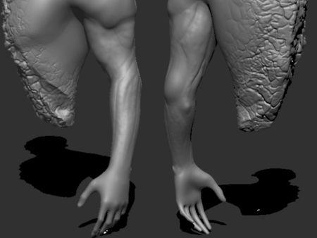 Arm Sculpt