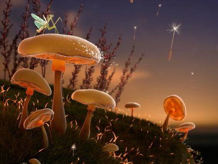 Mushrooms in Madrid