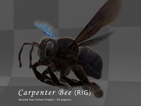 Carpenter Bee (Insect RIG)