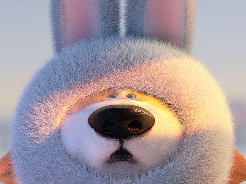 Bunny, but it's actually a corgi