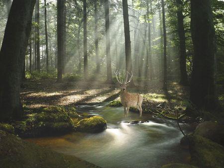 Fantasy Forest Concept Art