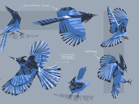 Western Blue Jay Bird