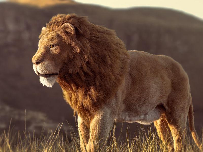 Nassati the lion