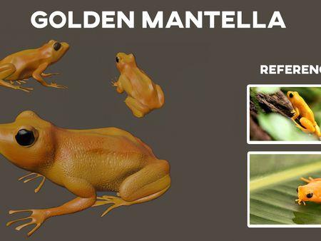 Golden Mantella