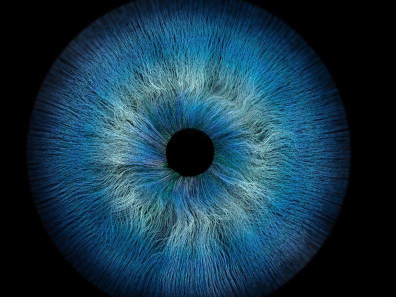 Weeky Drill -Human Eye.