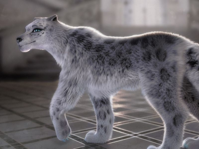 Sapphire the snow leopard