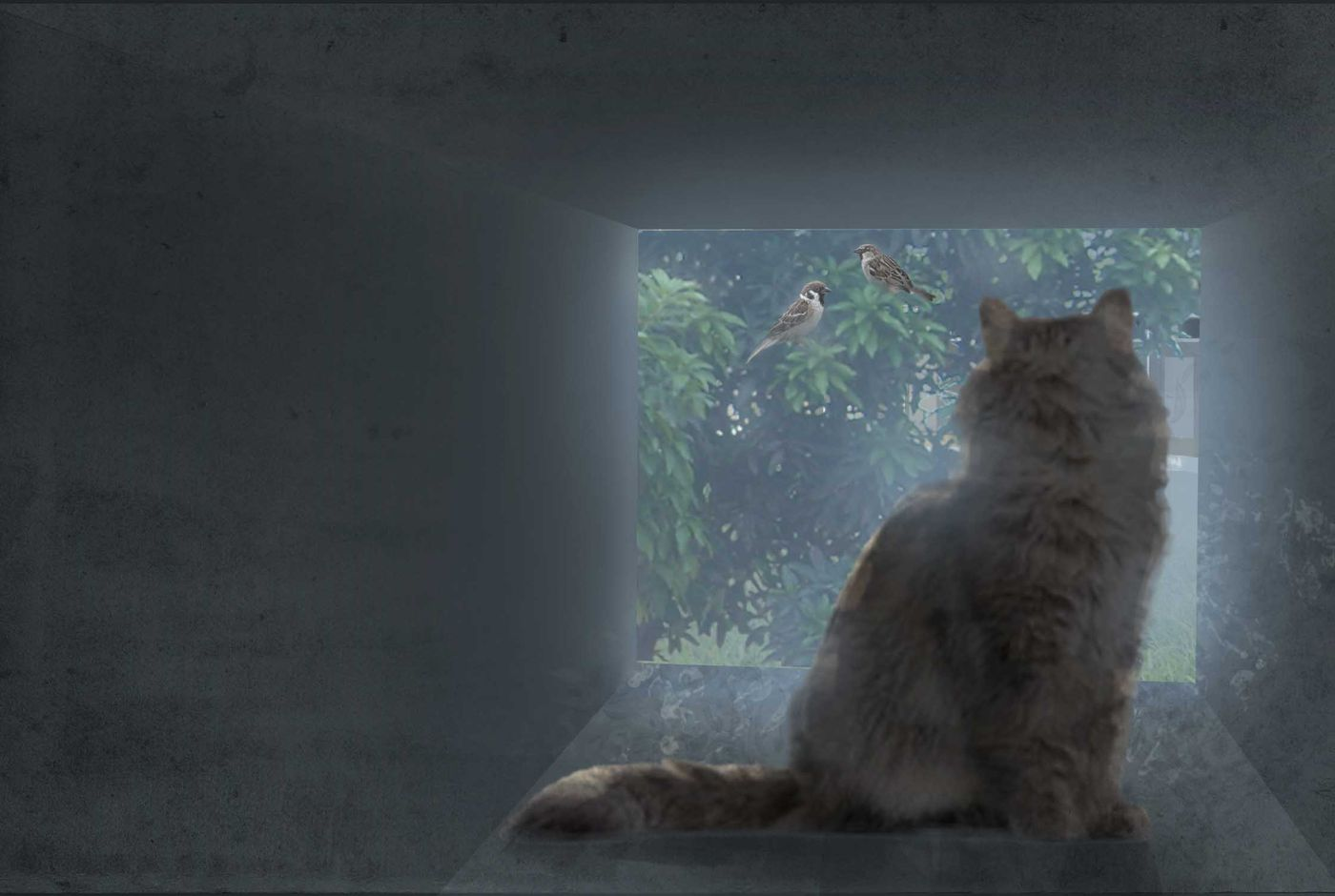 View%20from%20cattery%20tunnel%20out%20to%20courtyard%20version%202 Stephennjoto