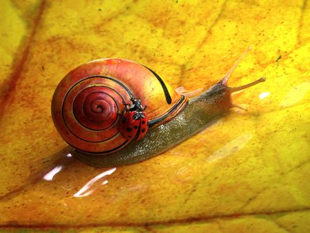 The Snaily Ride