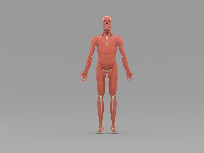 Skinned - Anatomy