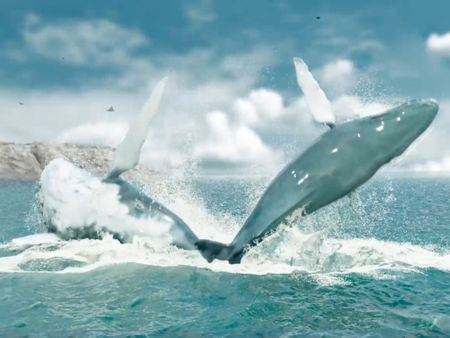 Whale splash/Flip