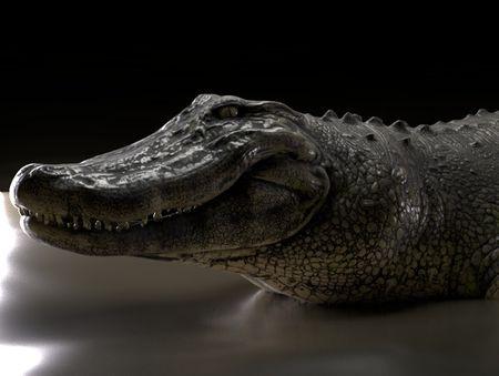 Alligator 3D sculpting