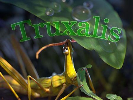 Truxalis