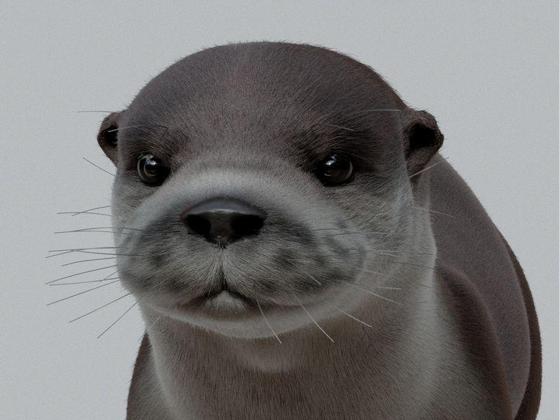 Otter Groom
