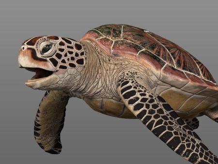 """""""Terry"""" - Green Sea Turtle"""