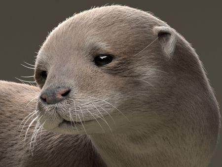 Otter  lookdev study