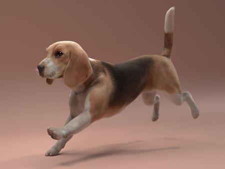Beagle Groom Study