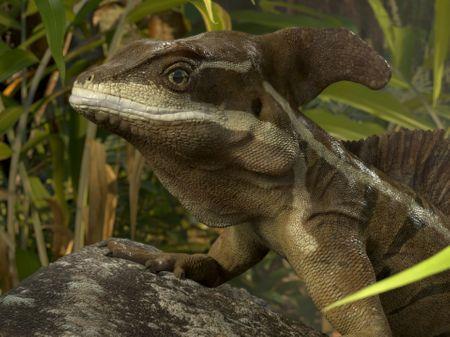 Lizard - Common Basilisk