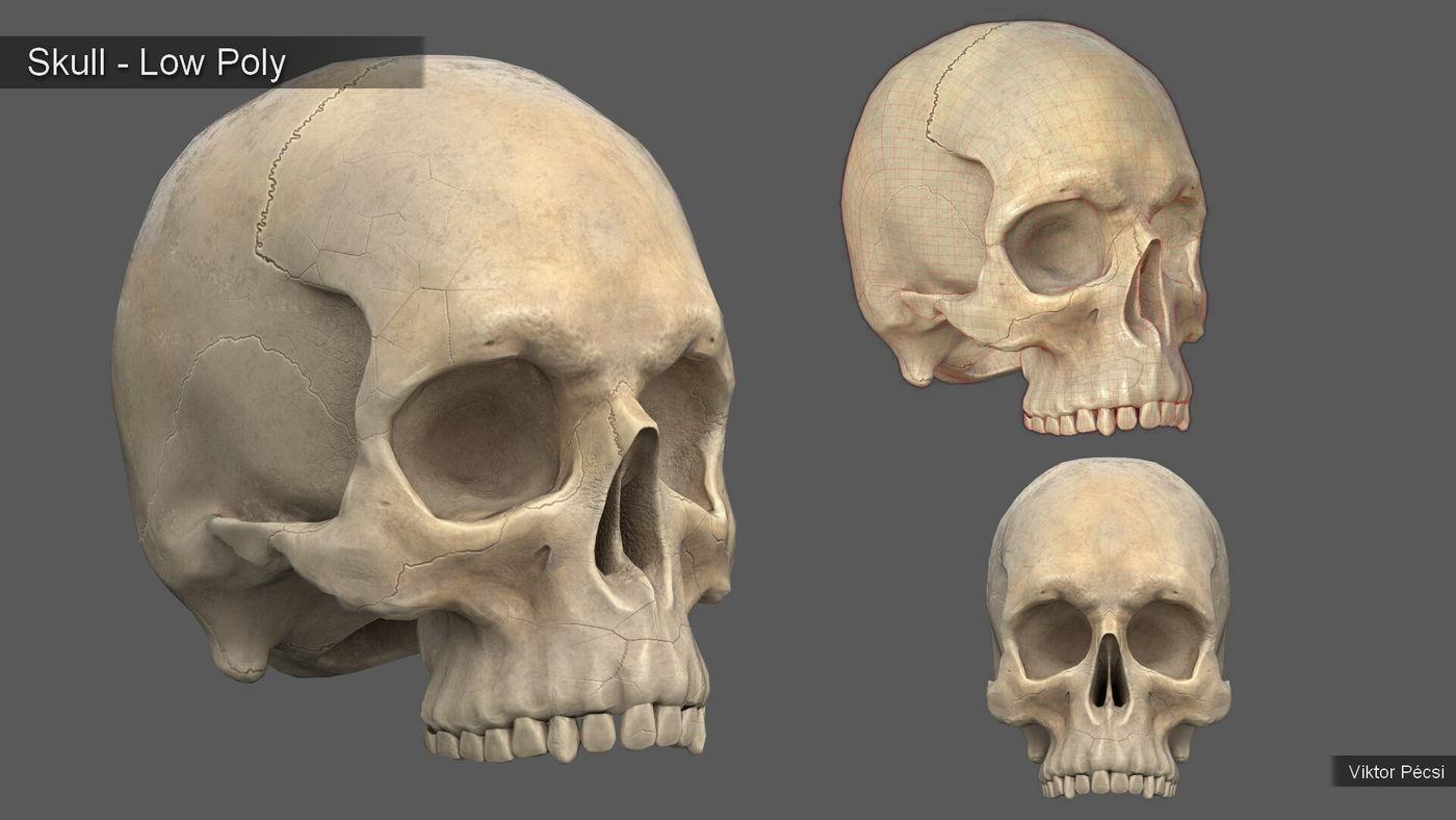Viktor Pecsi Skull Substance Viktorpecsi