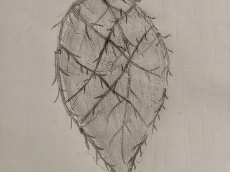 Branch & leaf Shield
