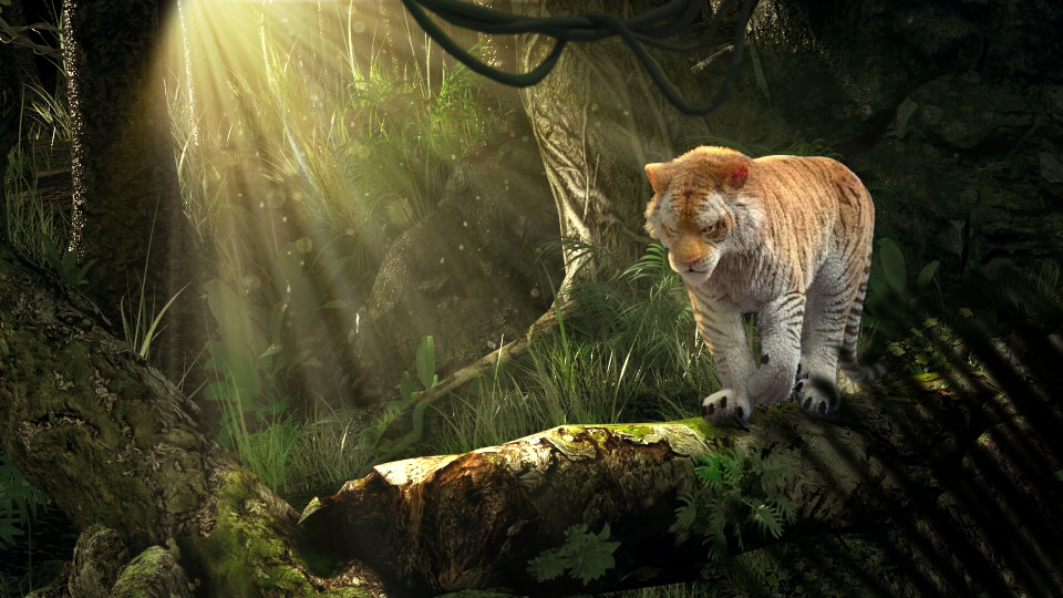 "Tigress shot AND Animated Short Film ""Across the Bridge:"""