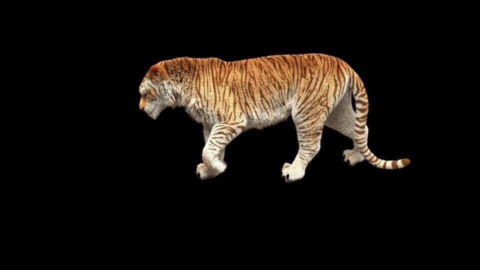 Tiger Wip1 Wearedow