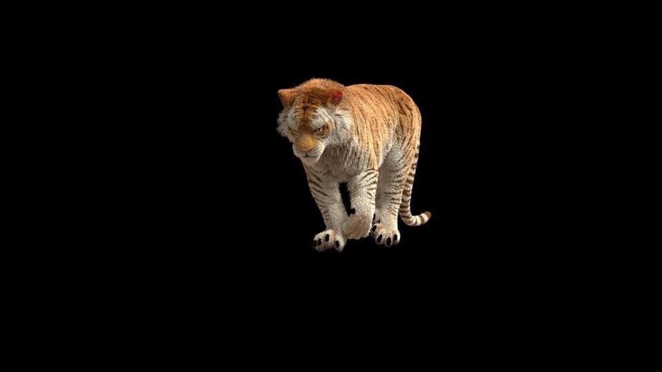 Tiger Wip2 Wearedow