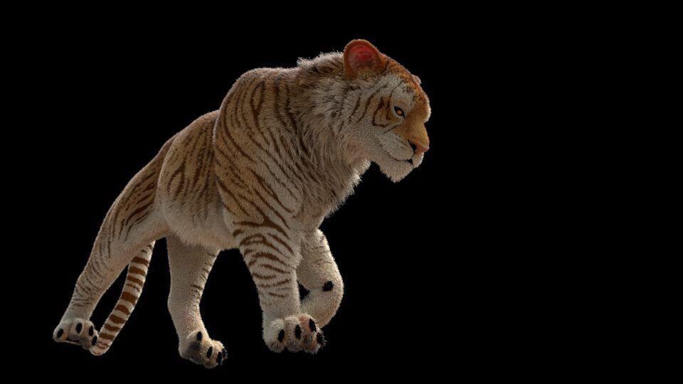 Tiger Wip3 Wearedow