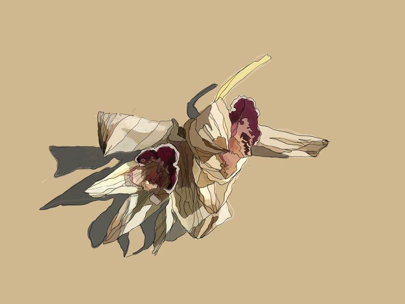 kwiatunio