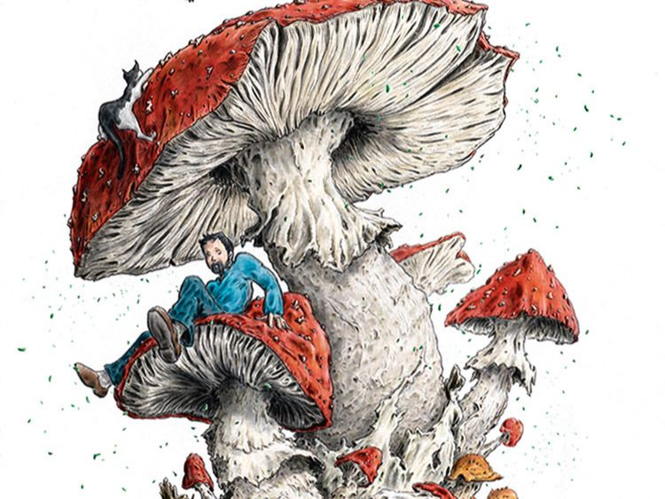 Butterfly on mushroom