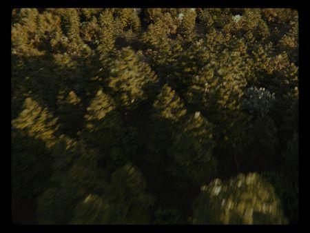 Digital Forest CGI Environment (Blender Cycles)
