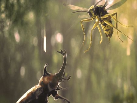Insect War