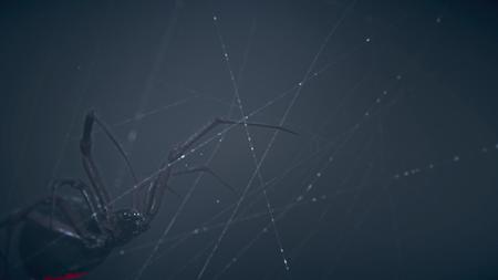 Araignee (Spider)