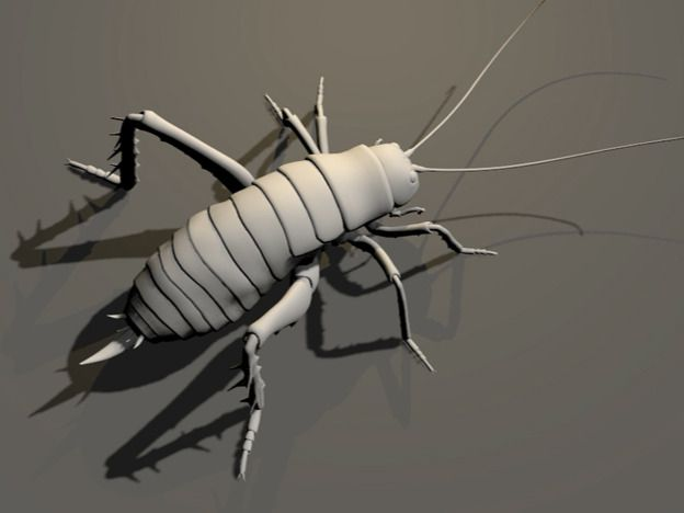 Insects animation