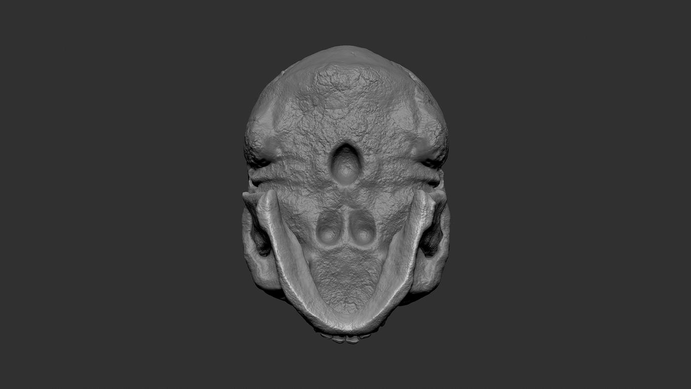 Skull Clay Bottom Yvyz