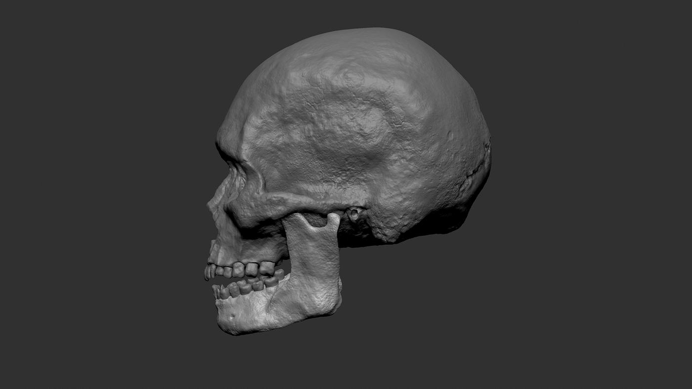 Skull Clay Side Yvyz