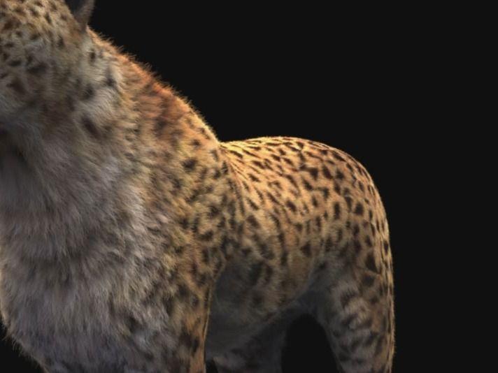 Cheetah Grooming